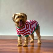 2018 Blank Christmas Pajamas - DOG